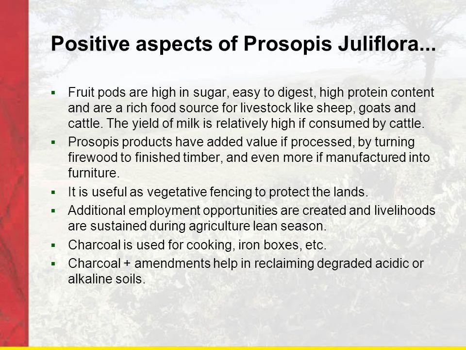 Positive aspects of Prosopis Juliflora...