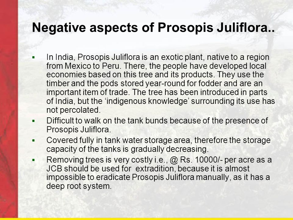 Negative aspects of Prosopis Juliflora..  In India, Prosopis Juliflora is an exotic plant, native to a region from Mexico to Peru. There, the people