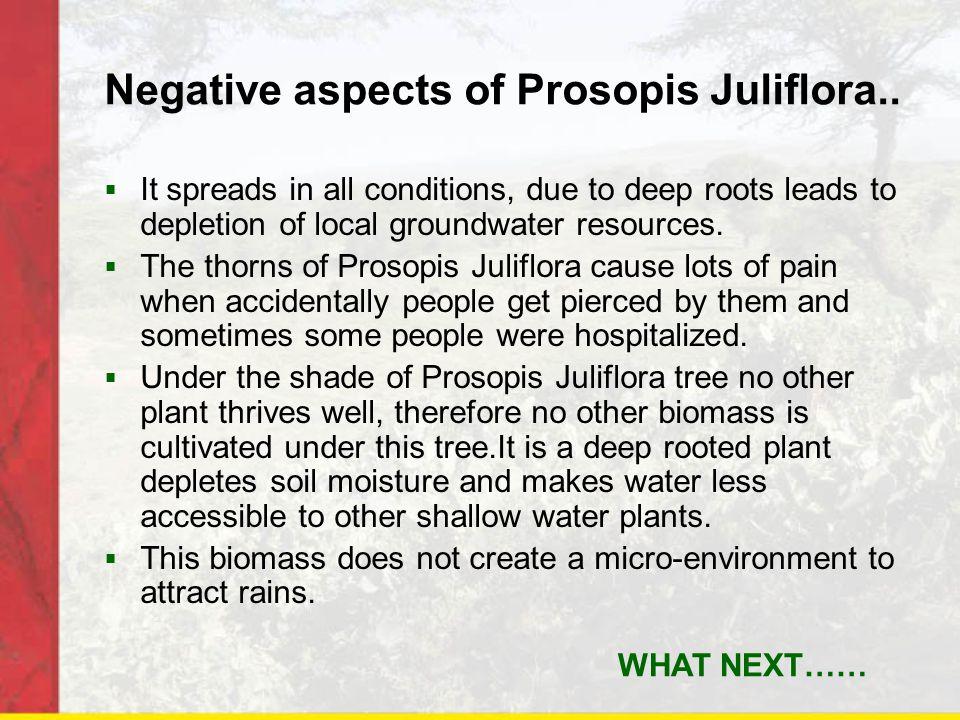 Negative aspects of Prosopis Juliflora..