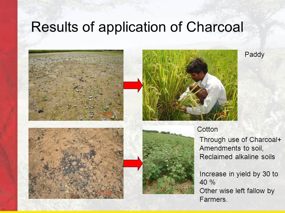 Results of application of Charcoal Paddy Cotton Through use of Charcoal+ Amendments to soil, Reclaimed alkaline soils Increase in yield by 30 to 40 % Other wise left fallow by Farmers.