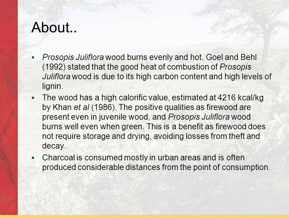 About..  Prosopis Juliflora wood burns evenly and hot.