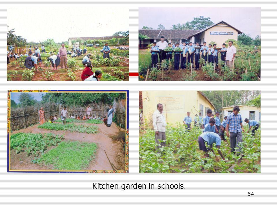 Kitchen garden in schools. 54