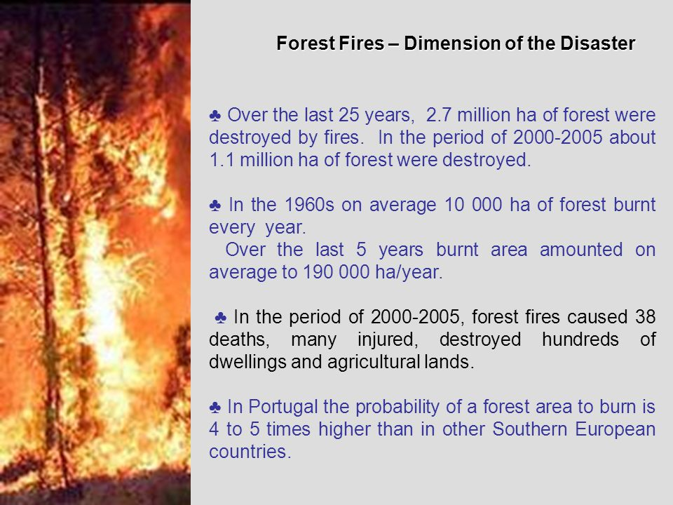 Forest Fires – Dimension of the Disaster ♣ Over the last 25 years, 2.7 million ha of forest were destroyed by fires.