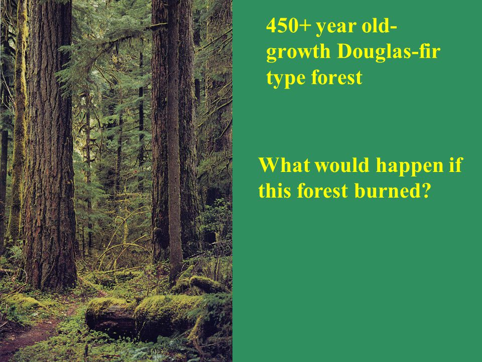 What would happen if this forest burned? 450+ year old- growth Douglas-fir type forest
