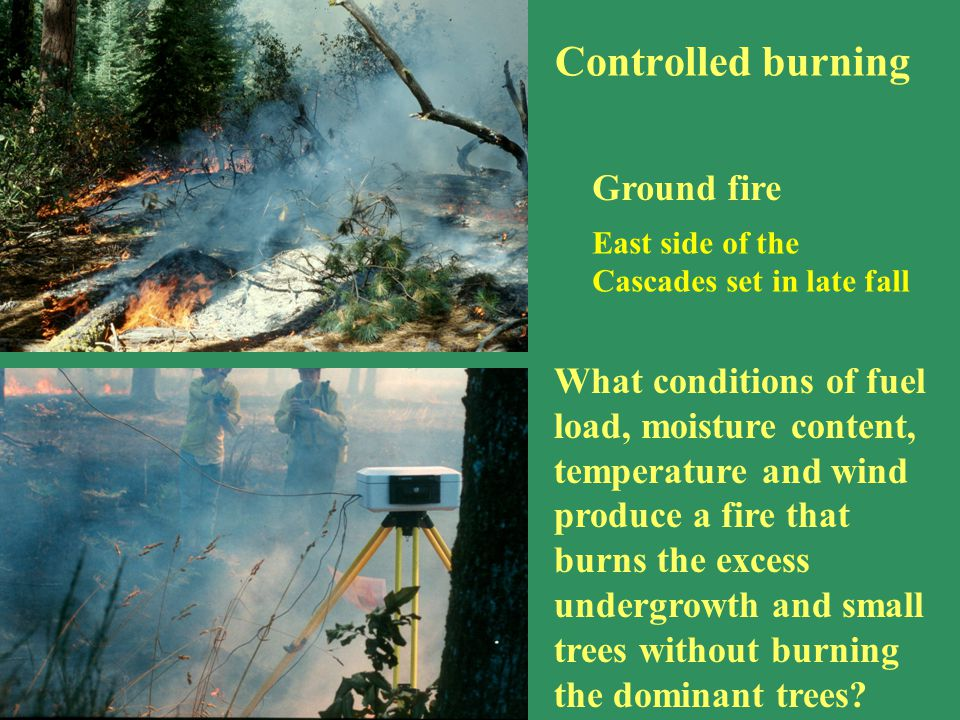 Controlled burning Ground fire What conditions of fuel load, moisture content, temperature and wind produce a fire that burns the excess undergrowth a