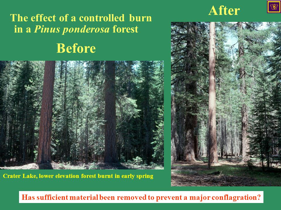 The effect of a controlled burn Before After The effect of a controlled burn Has sufficient material been removed to prevent a major conflagration.