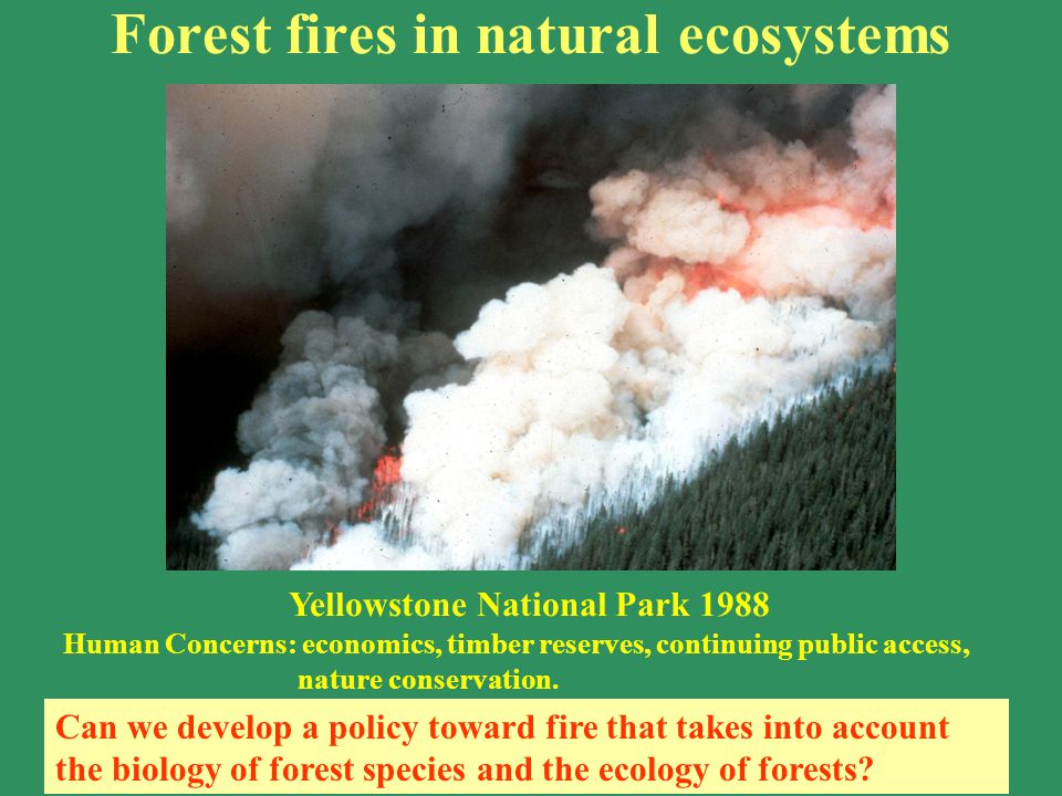 Forest fires in natural ecosystems Yellowstone National Park 1988 Human Concerns: economics, timber reserves, continuing public access, nature conserv