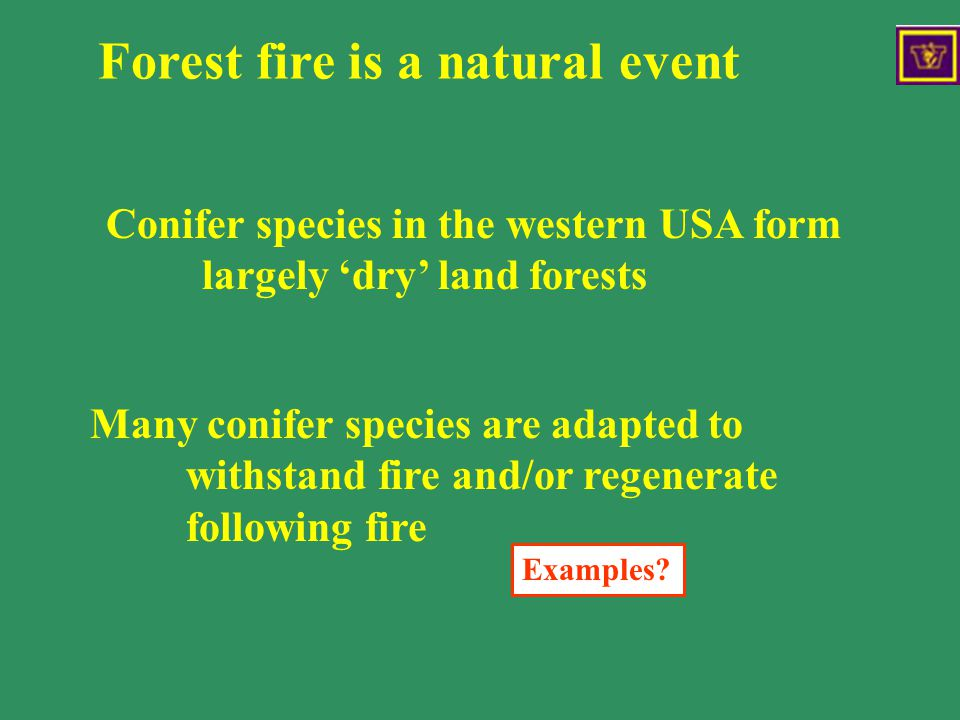Forest fire is a natural event Many conifer species are adapted to withstand fire and/or regenerate following fire Forest fires are a natural events Examples.