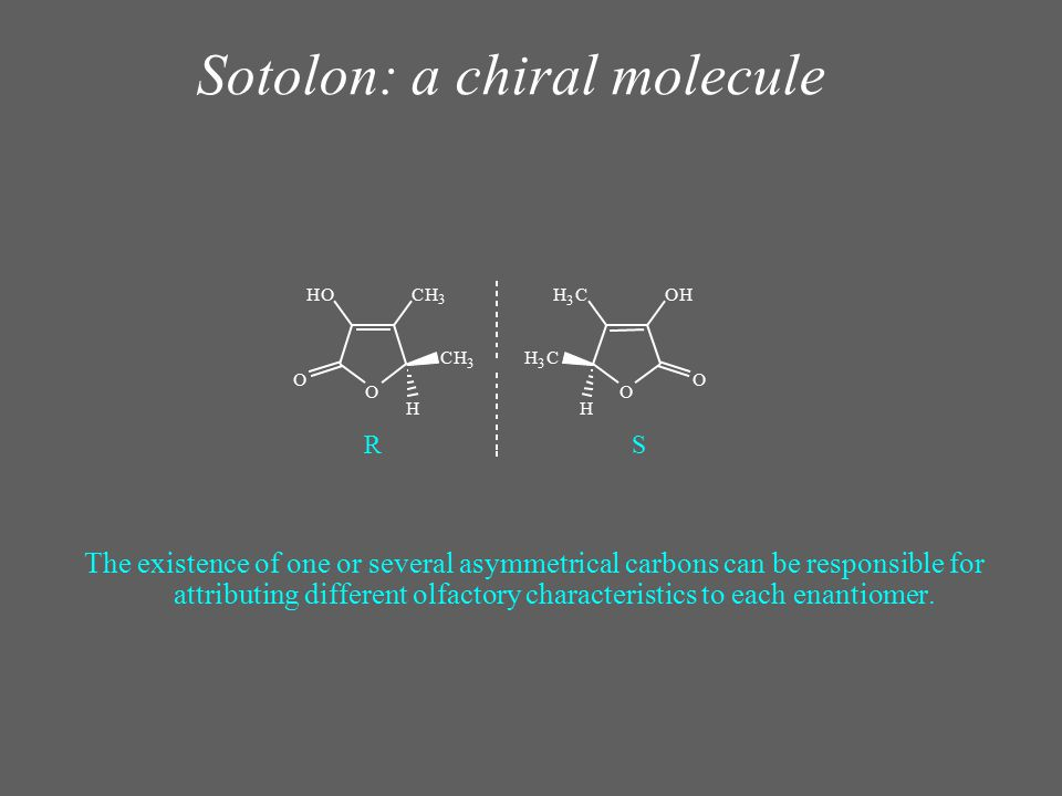 Sotolon: a chiral molecule The existence of one or several asymmetrical carbons can be responsible for attributing different olfactory characteristics