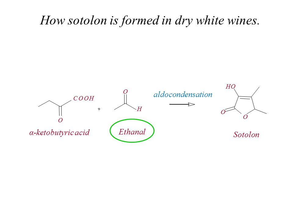 How sotolon is formed in dry white wines. O COOH O O O HO H α-ketobutyric acid Ethanal Sotolon aldocondensation