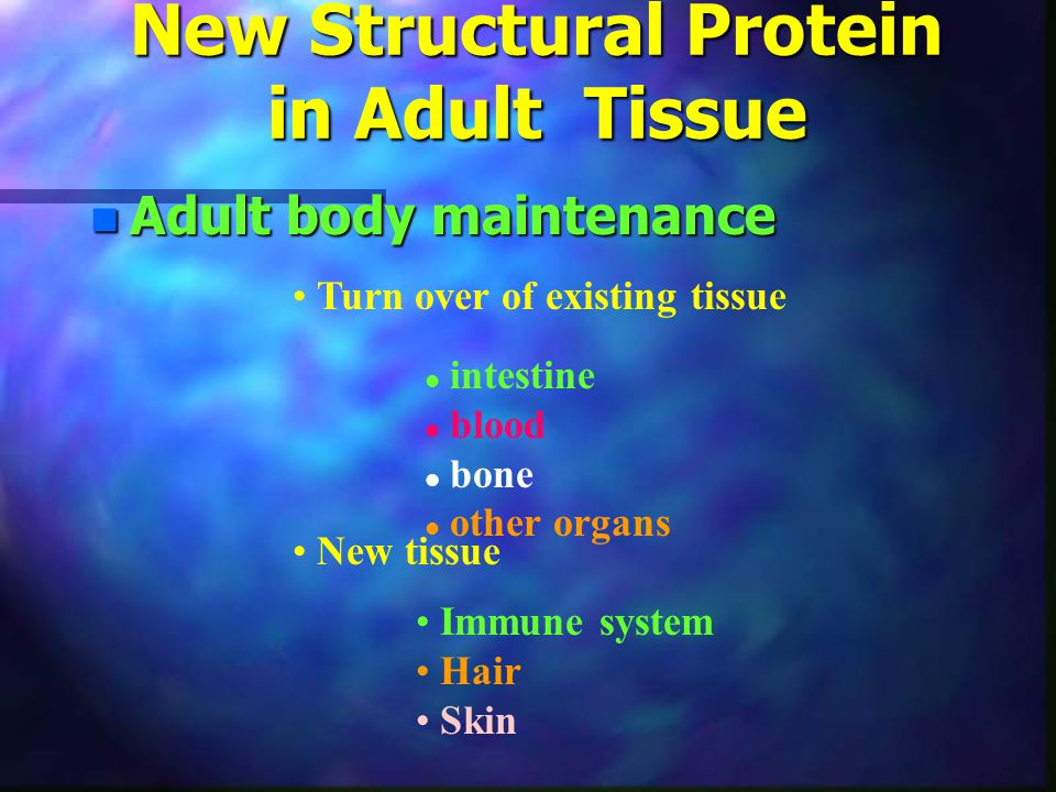 New Structural Protein in Adult Tissue n Adult body maintenance Turn over of existing tissue l intestine l blood l bone l other organs New tissue Immu