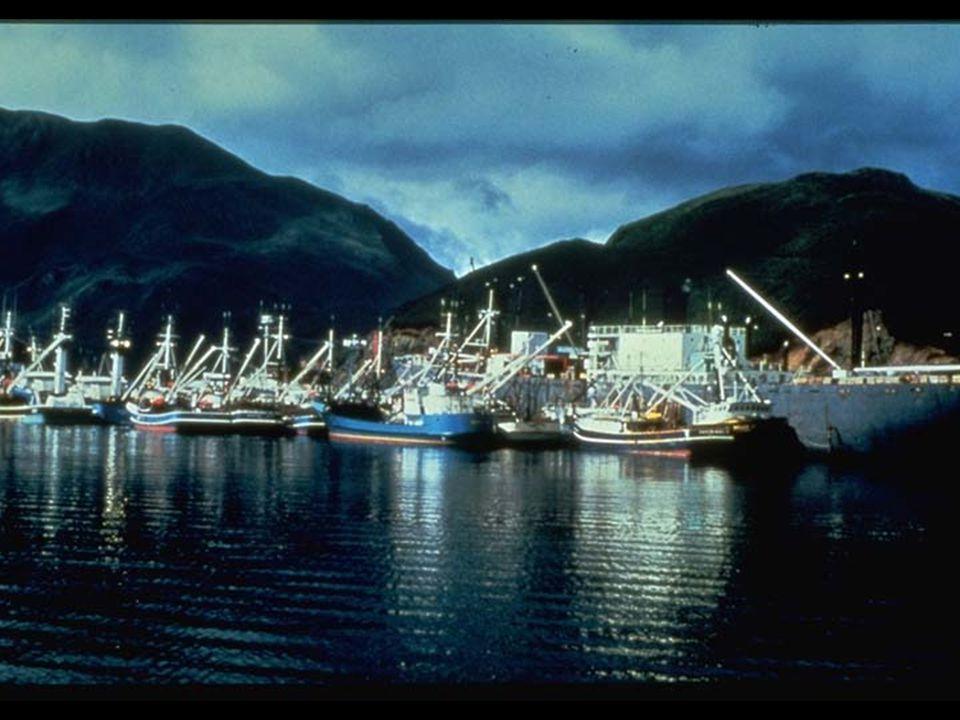 12. Fishing ships