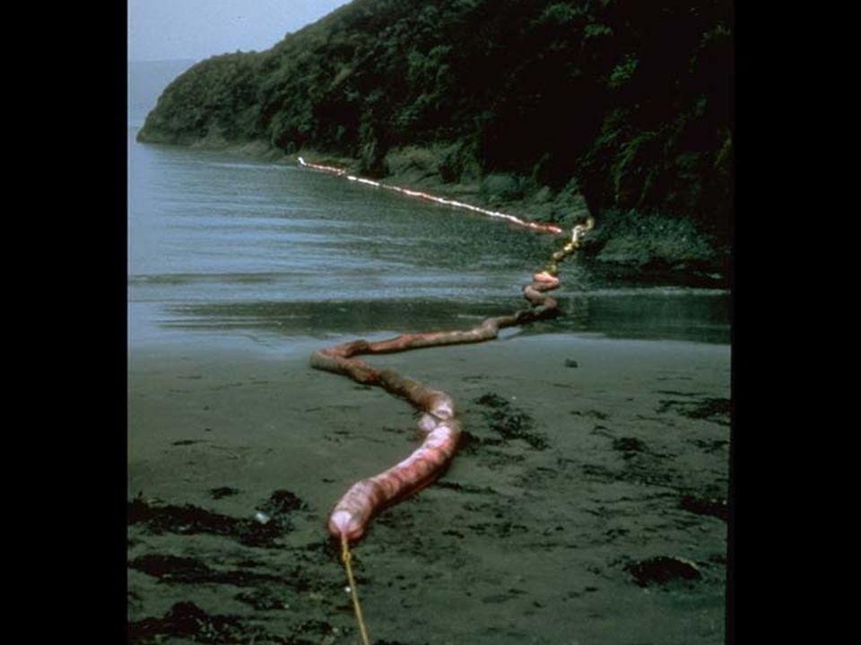38. Oil boom in intertidal