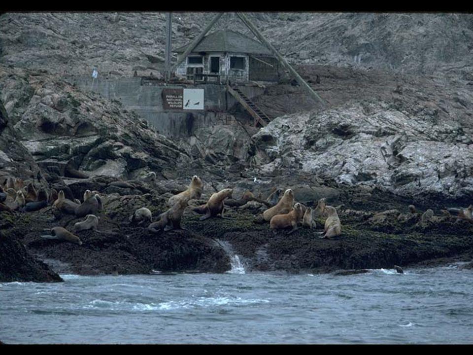 4. Seals on island