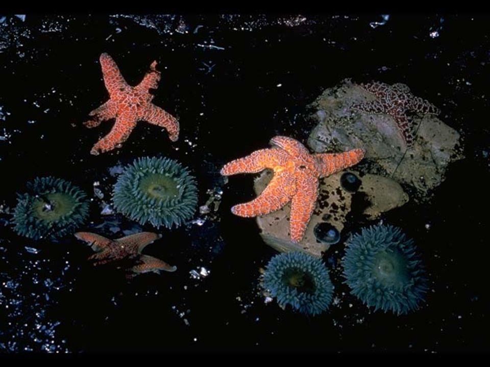 5. Sea Star
