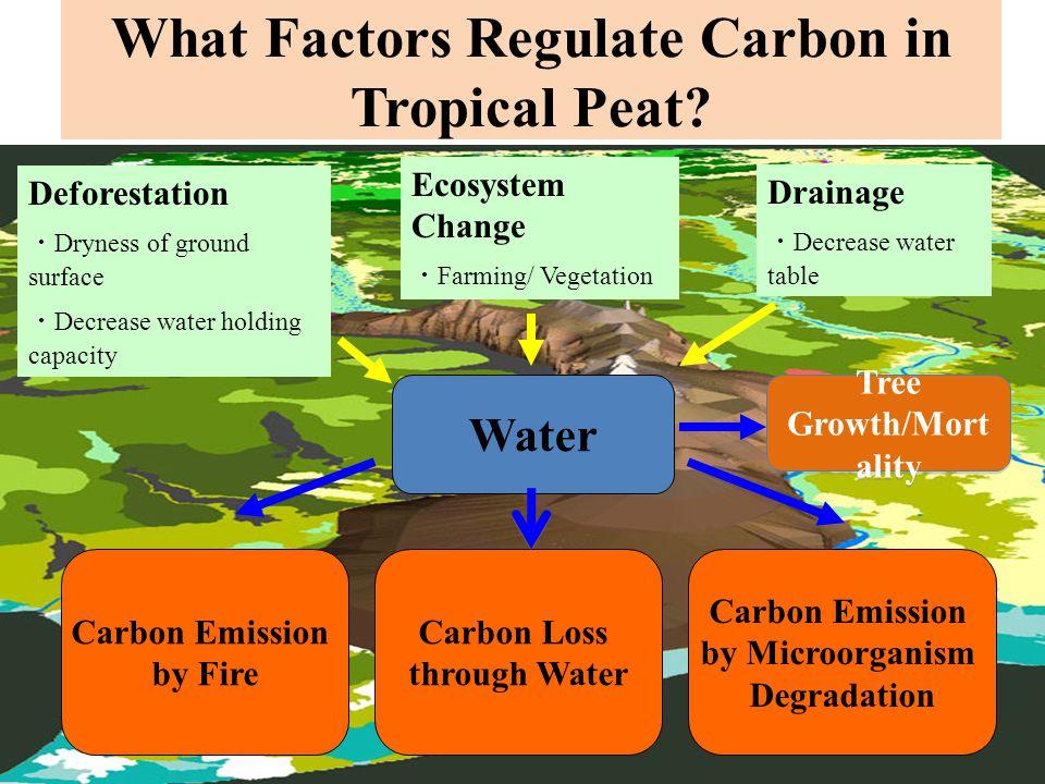 What Factors Regulate Carbon in Tropical Peat.