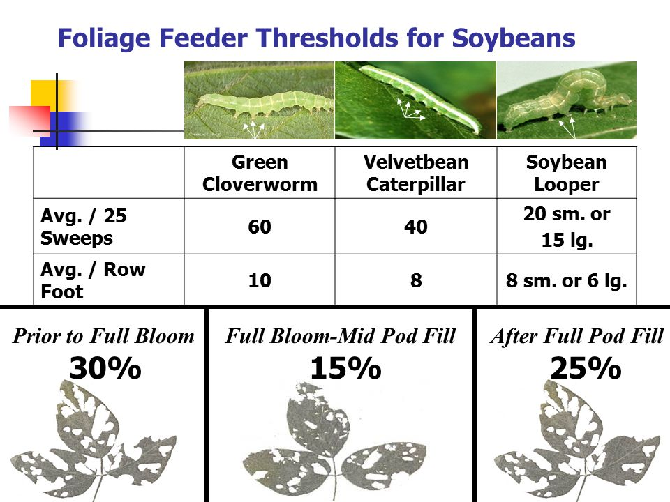 Foliage Feeder Thresholds for Soybeans Green Cloverworm Velvetbean Caterpillar Soybean Looper Avg. / 25 Sweeps 6040 20 sm. or 15 lg. Avg. / Row Foot 1