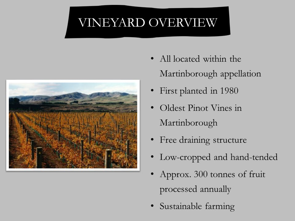 All located within the Martinborough appellation First planted in 1980 Oldest Pinot Vines in Martinborough Free draining structure Low-cropped and hand-tended Approx.