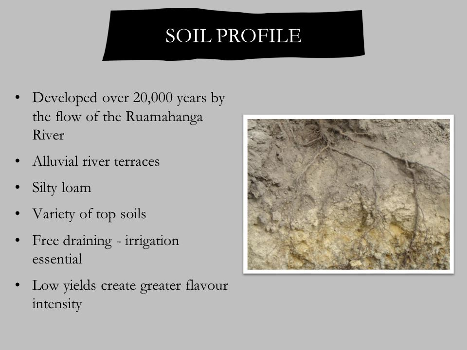 SOIL PROFILE Developed over 20,000 years by the flow of the Ruamahanga River Alluvial river terraces Silty loam Variety of top soils Free draining - irrigation essential Low yields create greater flavour intensity