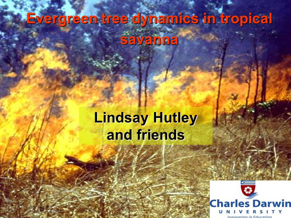 Lindsay Hutley and friends Evergreen tree dynamics in tropical savanna