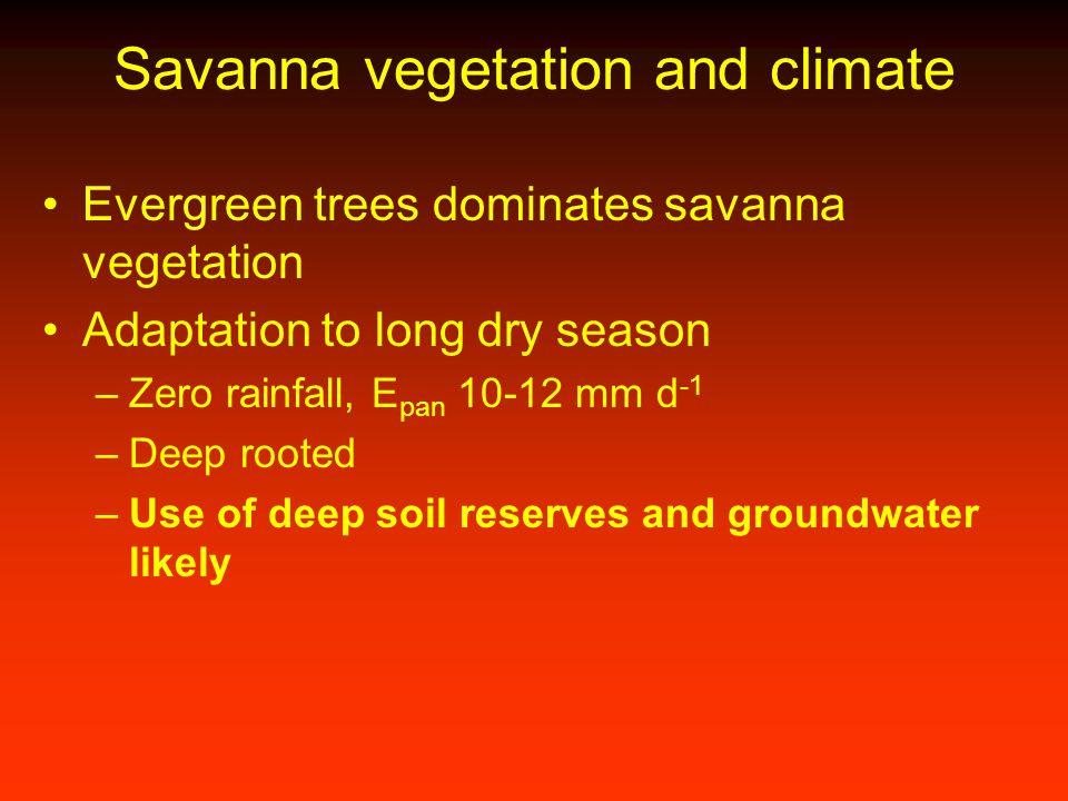 Savanna vegetation and climate Evergreen trees dominates savanna vegetation Adaptation to long dry season –Zero rainfall, E pan 10-12 mm d -1 –Deep ro