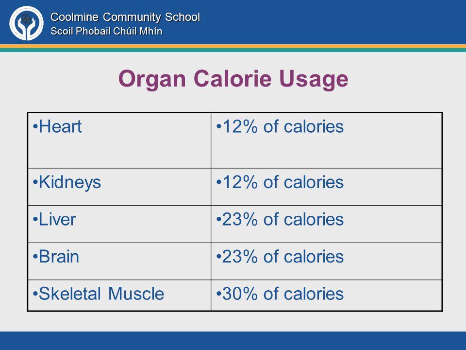 Coolmine Community School Scoil Phobail Chúil Mhín Organ Calorie Usage Heart12% of calories Kidneys12% of calories Liver23% of calories Brain23% of calories Skeletal Muscle30% of calories