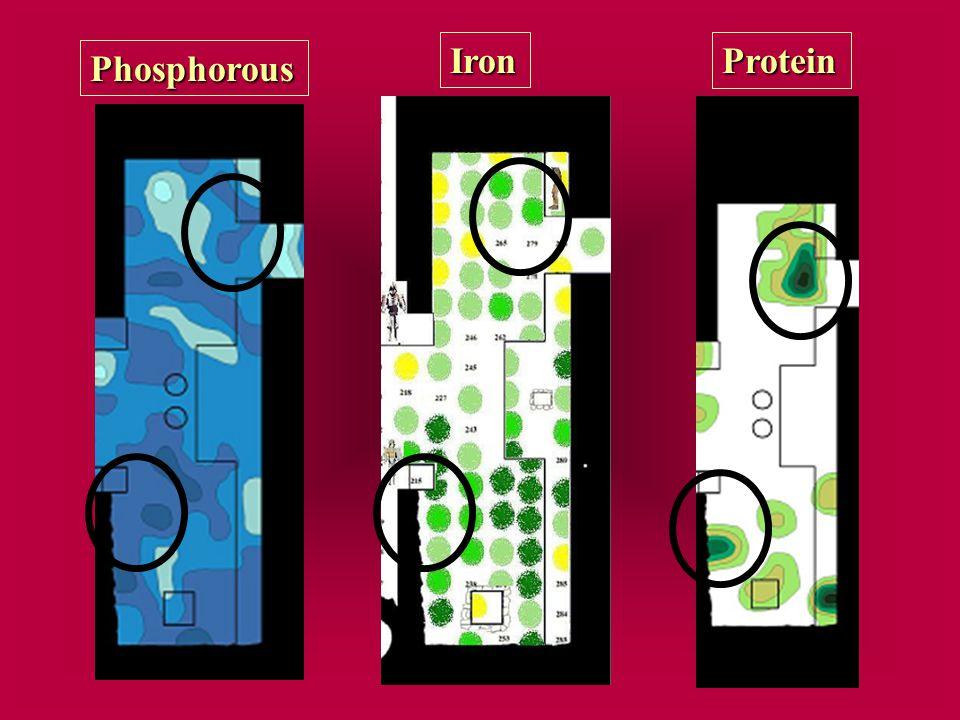 Phosphorous IronProtein