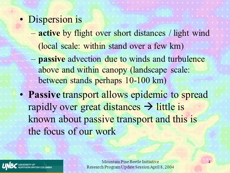 Mountain Pine Beetle Initiative Research Program Update Session April 8, 2004 4 Dispersion is –active by flight over short distances / light wind (local scale: within stand over a few km) –passive advection due to winds and turbulence above and within canopy (landscape scale: between stands perhaps 10-100 km) Passive transport allows epidemic to spread rapidly over great distances  little is known about passive transport and this is the focus of our work