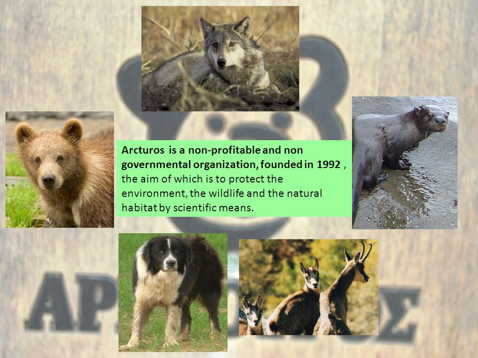 Arcturos is a non-profitable and non governmental organization, founded in 1992, the aim of which is to protect the environment, the wildlife and the natural habitat by scientific means.