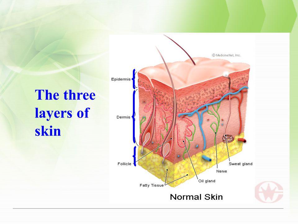 The three layers of skin