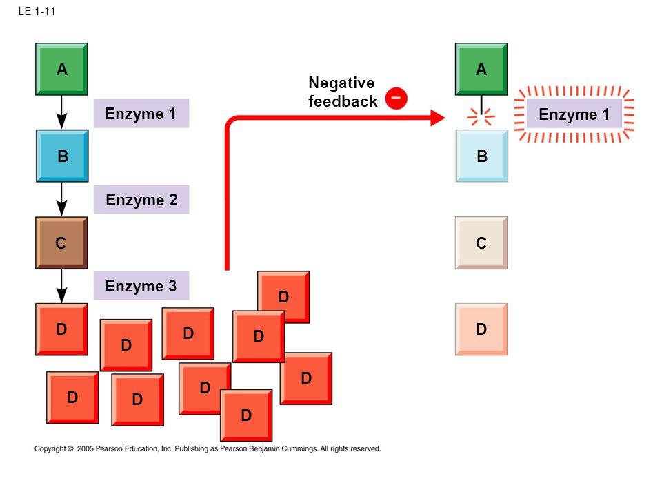 LE 1-11 Enzyme 1 A A B B C C D D D D D D D D D D D Enzyme 2 Enzyme 3 Negative feedback Enzyme 1