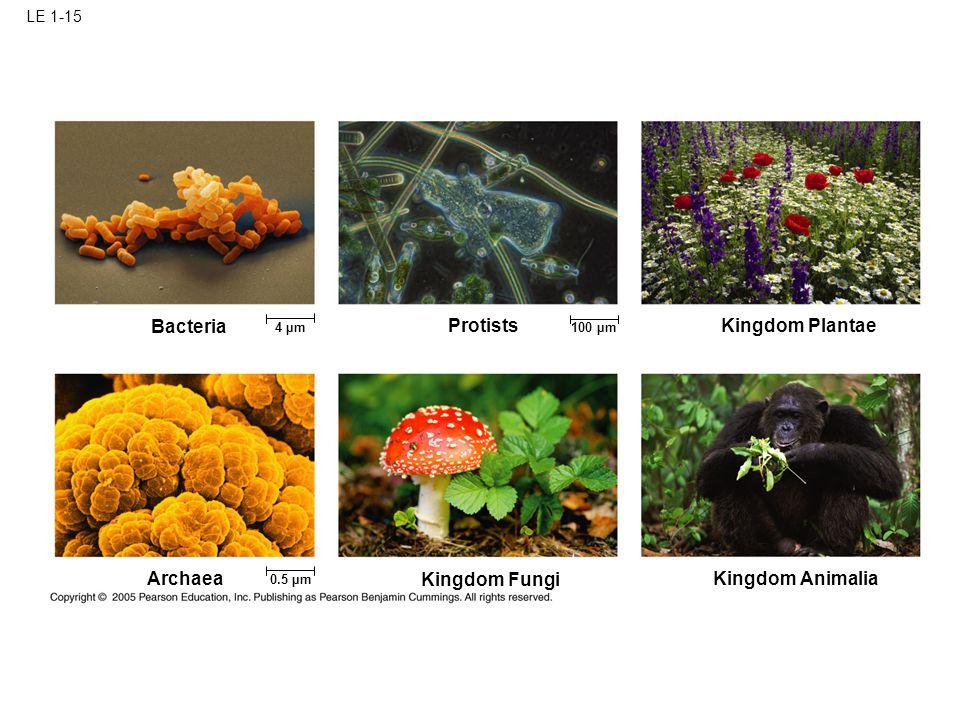 LE 1-15 Bacteria 4 µm 100 µm 0.5 µm Kingdom Plantae Protists Kingdom Animalia Kingdom Fungi Archaea