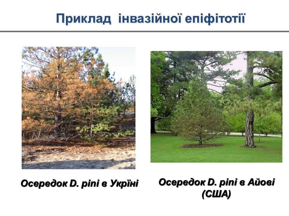 Осередок D. pini в Укрїні Осередок D. pini в Айові (США) Приклад інвазійної епіфітотії