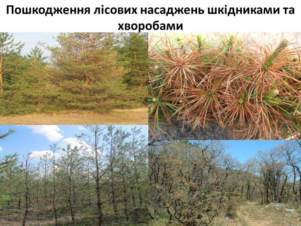 Пошкодження лісових насаджень шкідниками та хворобами 2