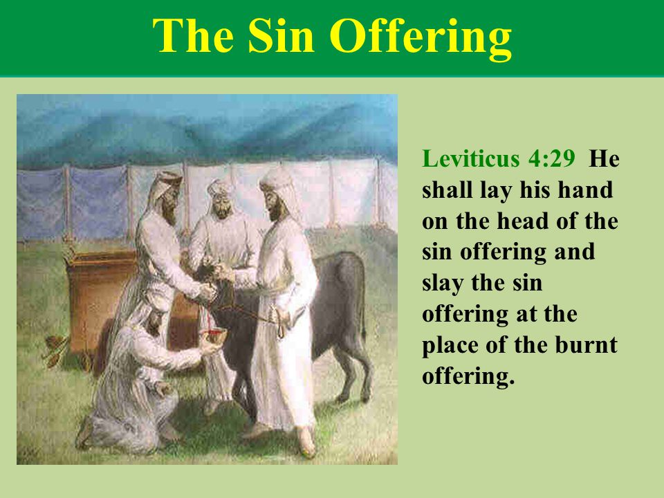 The Sin Offering Leviticus 4:29 He shall lay his hand on the head of the sin offering and slay the sin offering at the place of the burnt offering.
