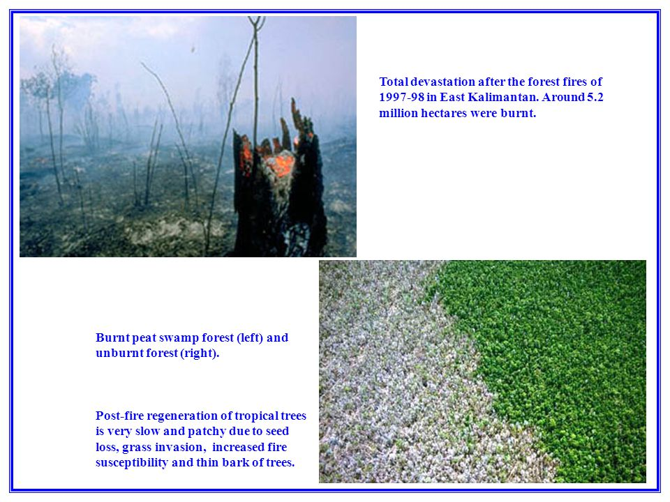 Burnt peat swamp forest (left) and unburnt forest (right).