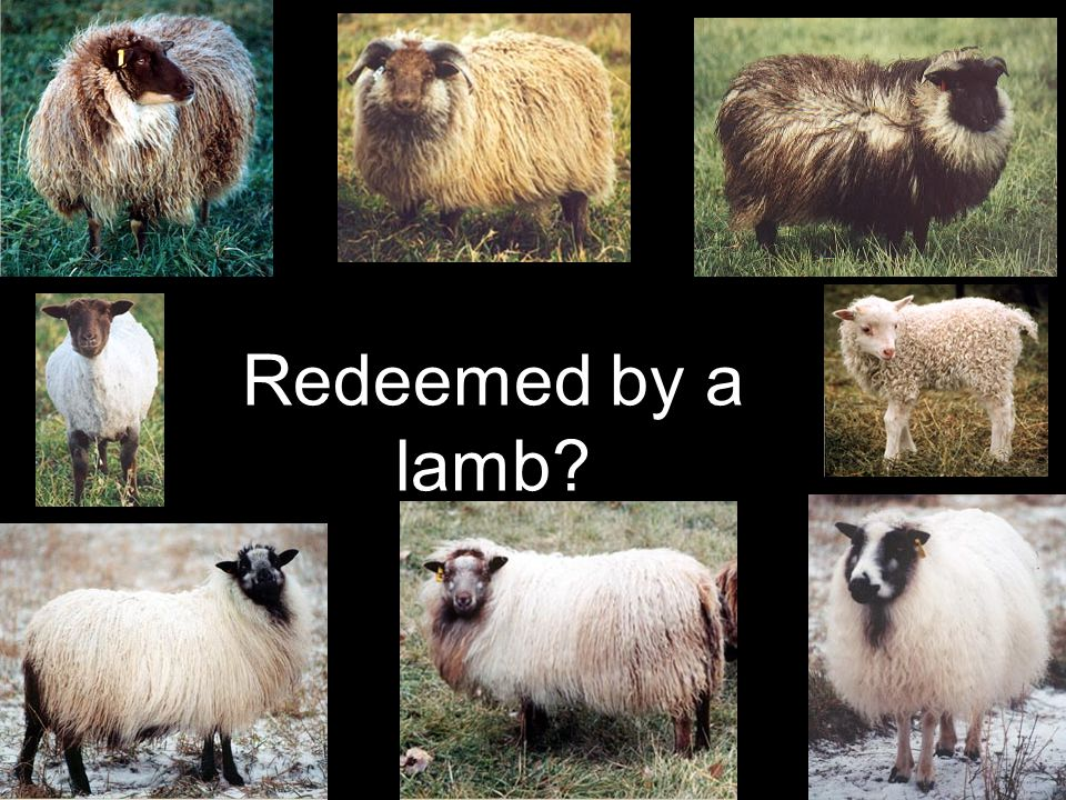 Redeemed by a lamb