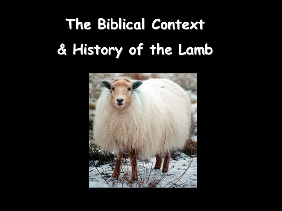 The Biblical Context & History of the Lamb