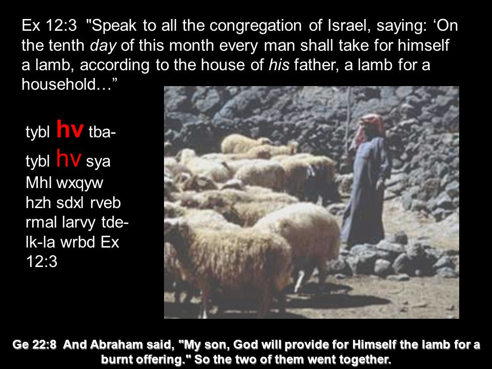 Ex 12:3 Speak to all the congregation of Israel, saying: 'On the tenth day of this month every man shall take for himself a lamb, according to the house of his father, a lamb for a household… tybl hv tba- tybl hv sya Mhl wxqyw hzh sdxl rveb rmal larvy tde- lk-la wrbd Ex 12:3 Ge 22:8 And Abraham said, My son, God will provide for Himself the lamb for a burnt offering. So the two of them went together.