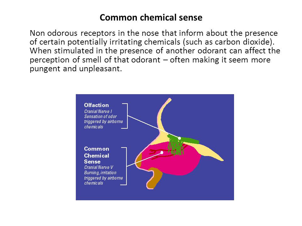 smell and taste chemical senses Advanced search allows to you precisely focus your query search within a content type, and even narrow to one or more resources you.
