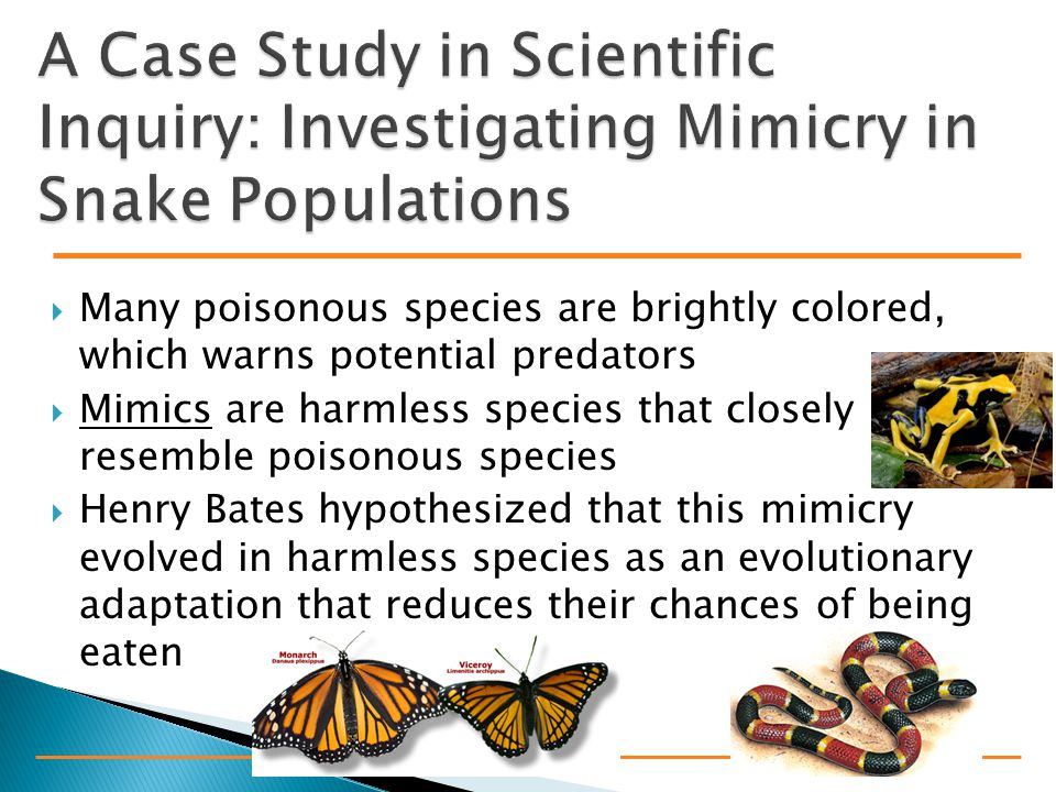  Many poisonous species are brightly colored, which warns potential predators  Mimics are harmless species that closely resemble poisonous species  Henry Bates hypothesized that this mimicry evolved in harmless species as an evolutionary adaptation that reduces their chances of being eaten