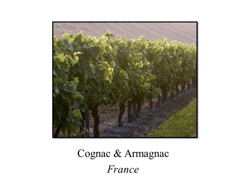 Cognac & Armagnac France