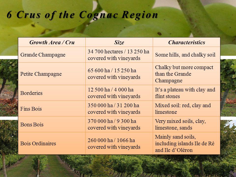 6 Crus of the Cognac Region 6 Crus of the Cognac Region
