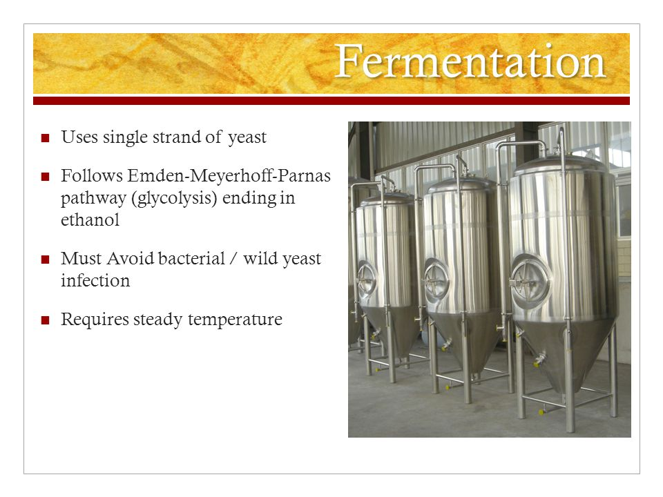 Fermentation Uses single strand of yeast Follows Emden-Meyerhoff-Parnas pathway (glycolysis) ending in ethanol Must Avoid bacterial / wild yeast infection Requires steady temperature