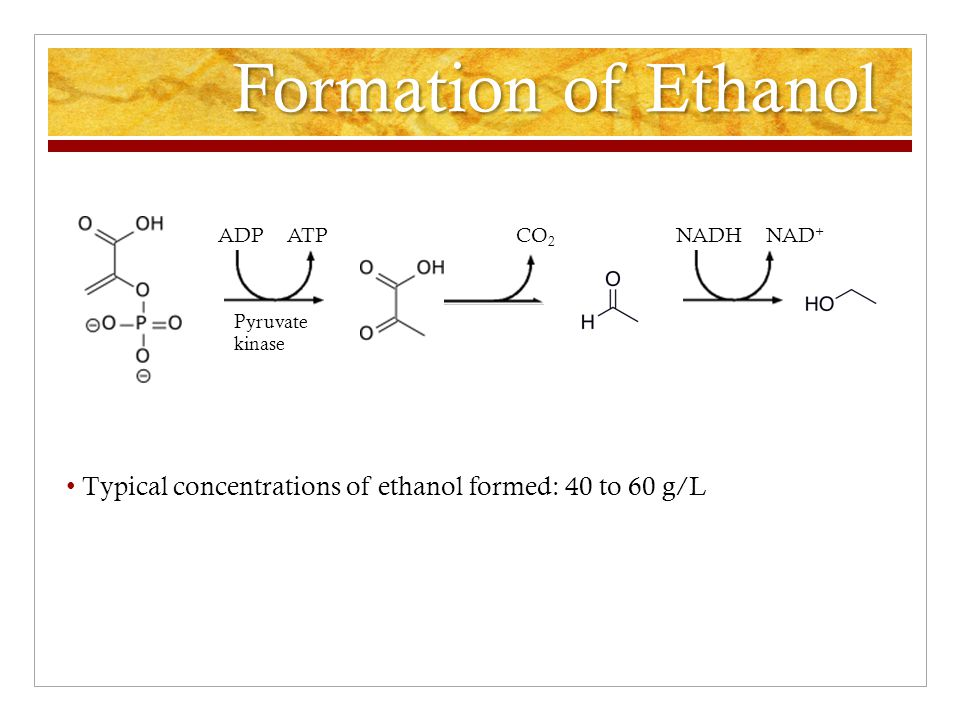 Formation of Ethanol ADP ATP CO 2 NADH NAD + Typical concentrations of ethanol formed: 40 to 60 g/L Pyruvate kinase