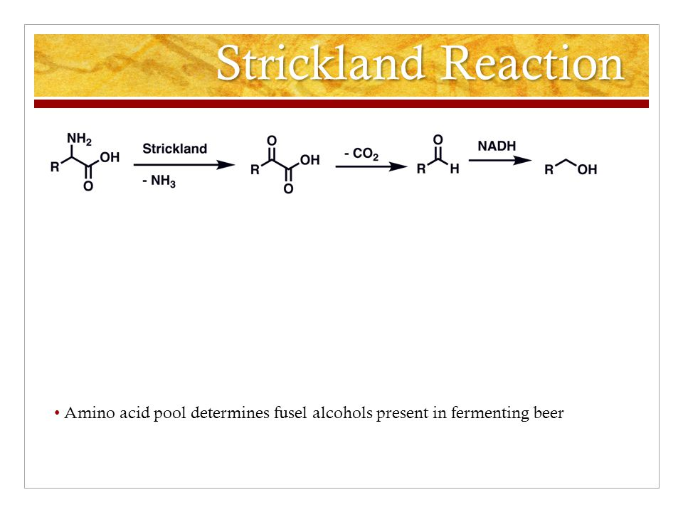 Strickland Reaction Amino acid pool determines fusel alcohols present in fermenting beer