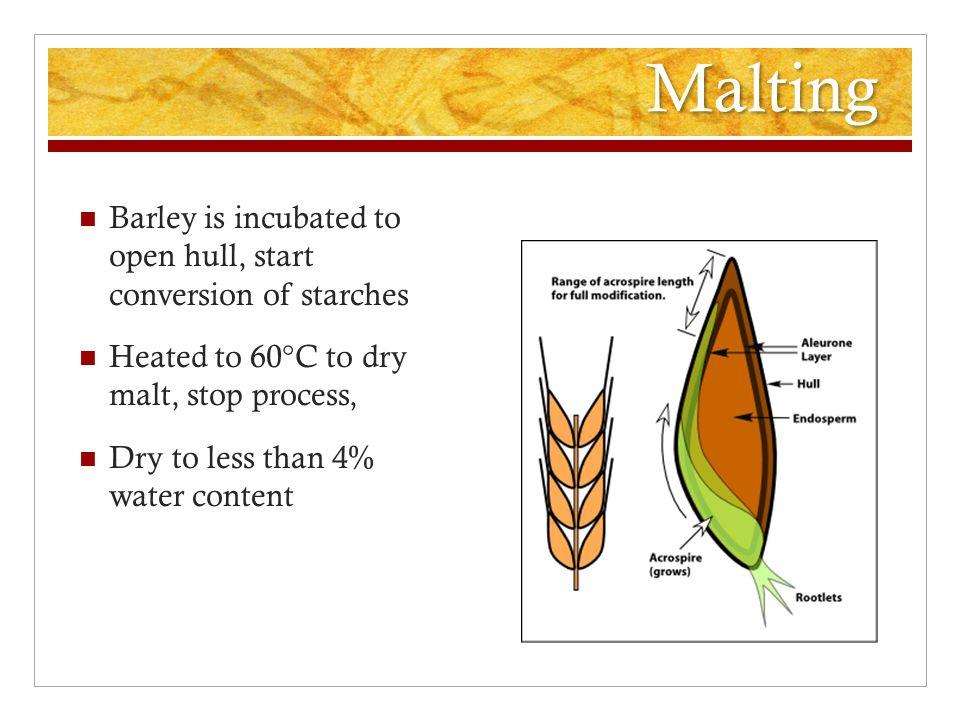 Kilning 75°C 110°C vs. Czech Pilsener Pale Ale Amber Malt Brown Malt