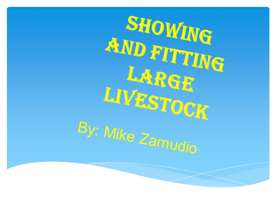 Showing and Fitting Large Livestock By: Mike Zamudio