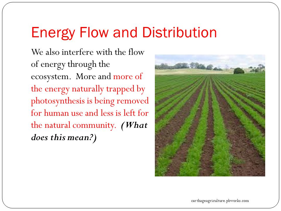 Energy Flow and Distribution We also interfere with the flow of energy through the ecosystem.