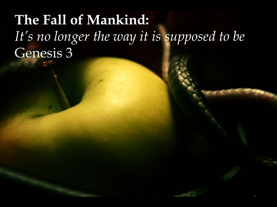 The Fall of Mankind: It's no longer the way it is supposed to be Genesis 3
